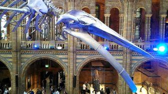 自然史博物館(Natural History Museum)ー大人も子供も楽しめる、見どころ満載の博物館です