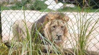 Chester Zoo で出会った動物たち。チェスターの街並みもちょっとだけご紹介したいと思います!(Chester Zoo その2)