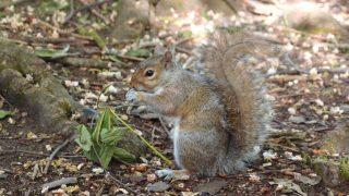 ロンドンで出会える動物たちーロンドンほどの大都会でこんなにも多くの動物が生息していることに驚きです。